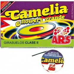 6 Camelias Grandes