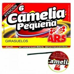 6 Camelias Pequeñas